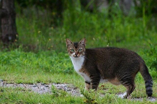 Túi nguyên thủy ở bụng mèo và những điều chưa biết