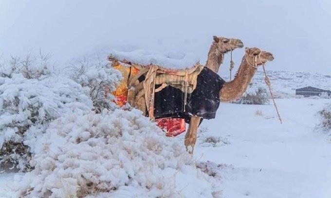 Tuyết phủ trắng sa mạc Sahara trong thời tiết -2 độ C