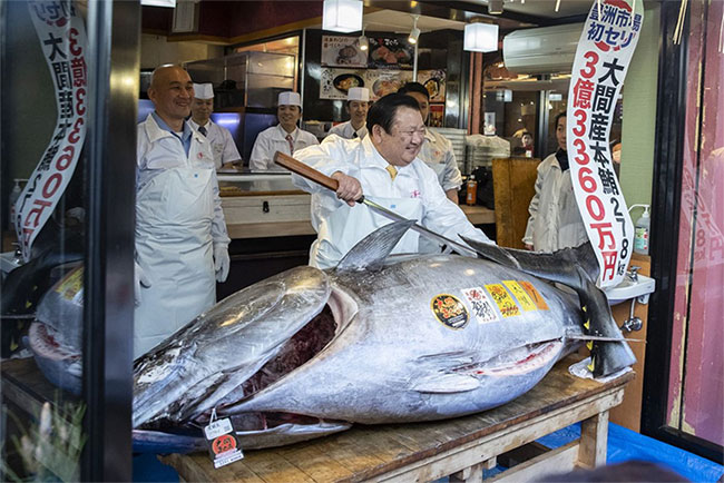 Vì sao cá ngừ vây xanh ở Nhật có giá hàng triệu USD?