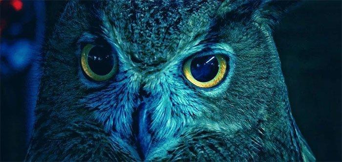 Vì sao chim cú có thể nhìn xuyên đêm tối?