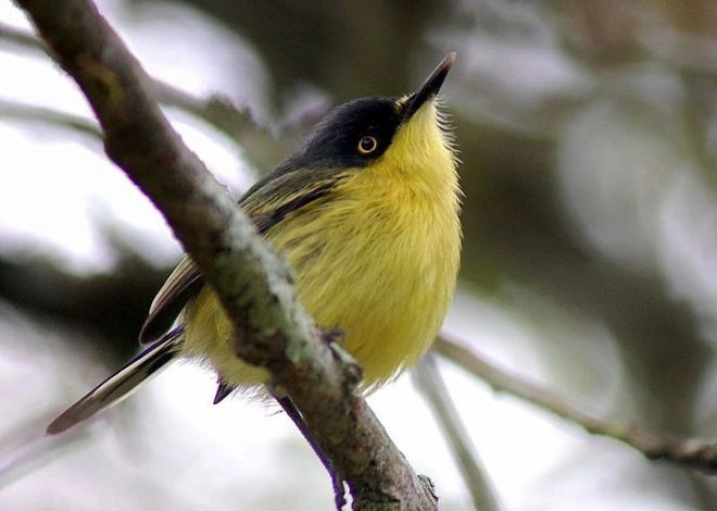 Vì sao chim di cư? Có thực sự là do chúng sợ lạnh?