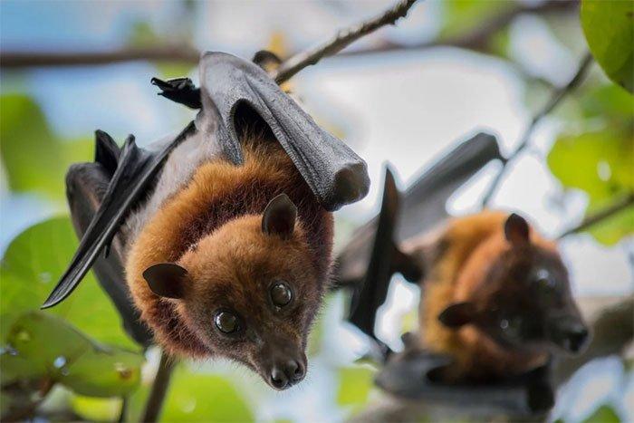 Vì sao con người dễ nhiễm bệnh từ động vật?