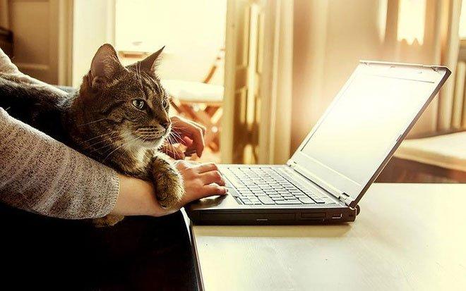 Vì sao mèo thích nằm cạnh laptop, bước qua bàn phím?