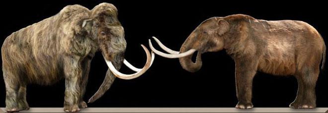 Vì sao mũi của loài voi lại tiến hóa để dài như vậy?