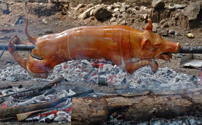 Vì sao người Hồi giáo không ăn thịt lợn?