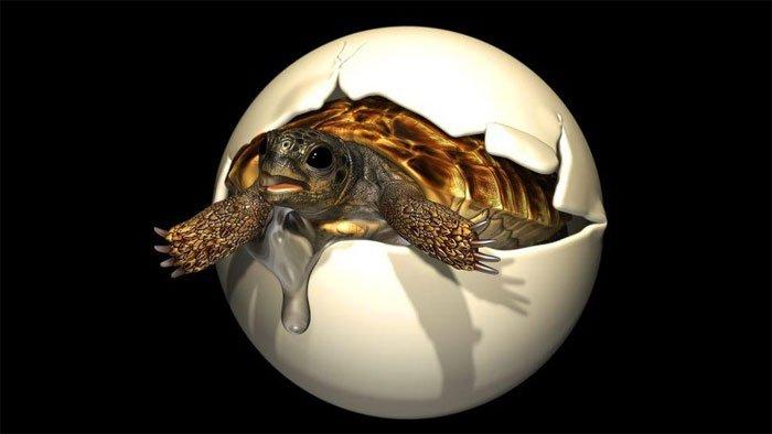 Vì sao phôi thai rùa quý hiếm 90 triệu năm tuổi vẫn tồn tại?