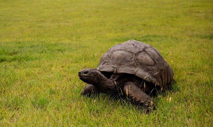 Vì sao rùa làđộng vật trên cạn sống lâu nhất?