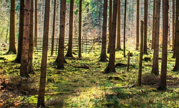 Vì sao thân cây hình trụ?