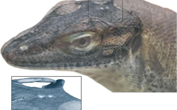 Vì sao thằn lằn có tới 4 mắt?