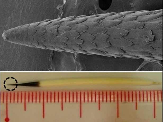 Video: Điều gì xảy ra khi lốp ô tô cán qua lông nhím? Liệu sợi lông có đủ làm thủng lốp?