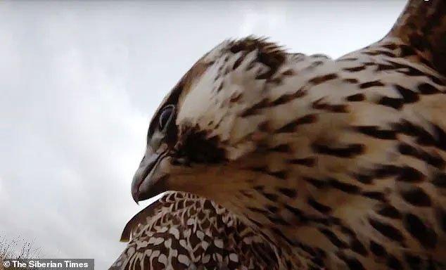 Video: Giật mình trước cảnh chim ưng tấn công máy bay không người lái ở độ cao 700m