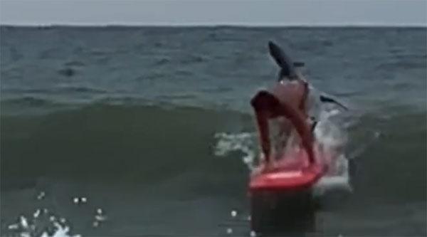 Video khoảnh khắc rợn tóc gáy: Chàng trai lướt ván ngay trước hàm cá mập