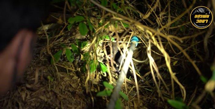 Video: Phát hiện tiếng động trong bụi rậm, nhóm người soi đèn vào trong và phát hiện bất ngờ