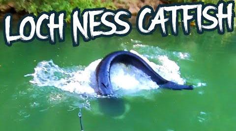 Video: Thả câu trong hồ nước xanh, người đàn ông kinh ngạc khi kéo lên quái vật hồ Loch Ness