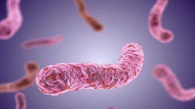 Video từ kính hiển vi cho thấy vi khuẩn chạy trốn bạch cầu trung tính