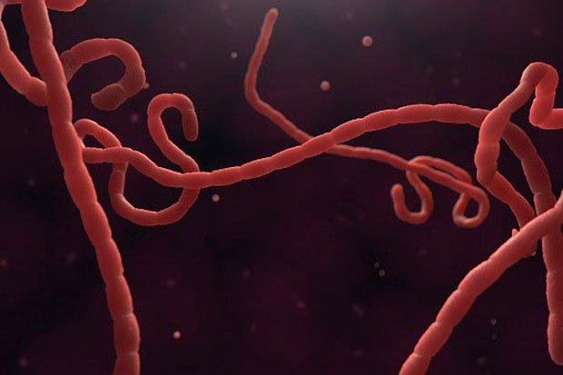 Virus Ebola đang dần tiến hóa, đe dọa nghiêm trọng tới sức khỏe người dân Cộng hòa Congo