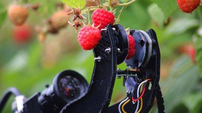 Vịt robot giúp nông dân Nhật diệt cỏ không cần hóa chất