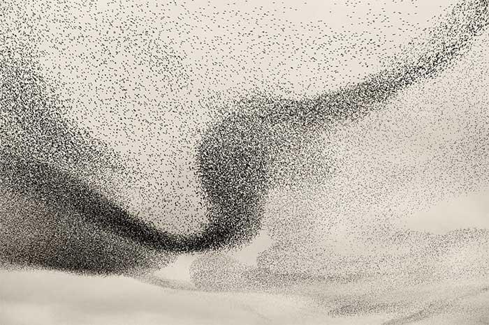 Vũ điệu mặt trời đen của hàng triệu con chim