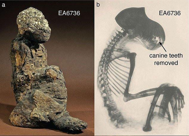 Xác ướp không phải con người tiết lộ đất châu báu đầy vàng 3.000 năm
