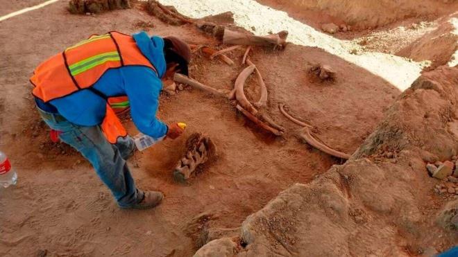 Xây sân bay, bất ngờ phát hiện hàng chục bộ xương voi ma mút