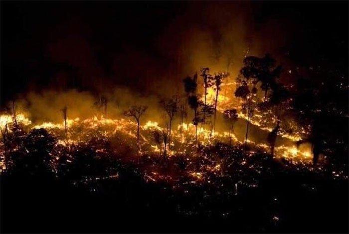 Xót xa nhìn những con thú chết cháy khi rừng Amazon bị bà hỏa ghé thăm