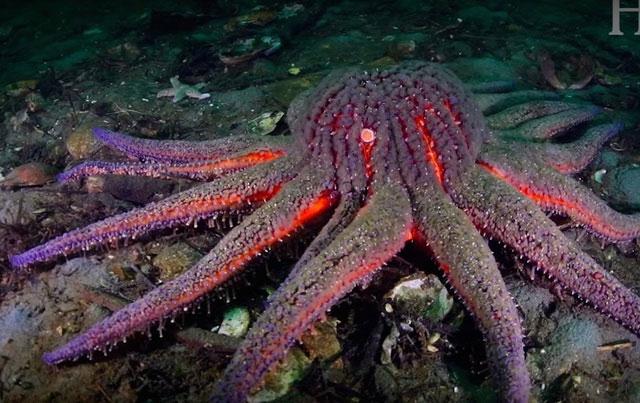 """Xuất hiện """"sao biển Zombie"""" dưới lòng đại dương cảnh báo cho một hiểm họa khôn lường"""
