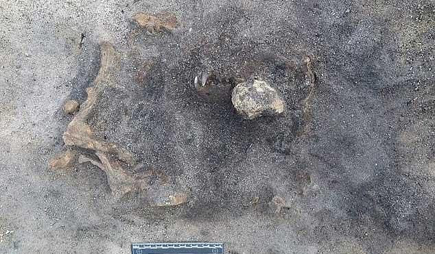 Bí ẩn hài cốt không phải con người nằm lẫn trong khu mộ cổ 8.400 năm