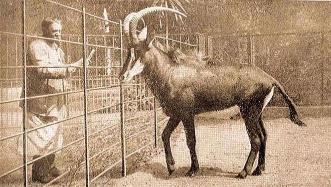 Đã tuyệt chủng một thế kỷ, liệu loài ngựa vằn tàn lụi này có thể thực sự sống lại?