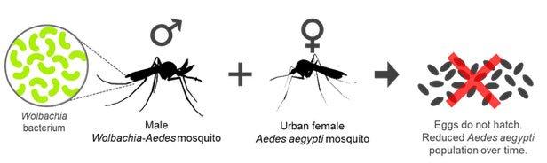 Kỷ lục: Nhà nghiên cứu cho 5.000 con muỗi đốt trong một ngày vì khoa học