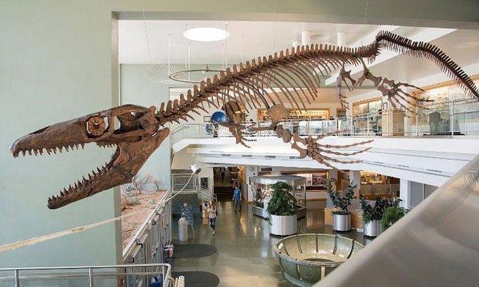 Phát hiện thủy quái 10m thống trị biển Bắc Mỹ 80 triệu năm trước