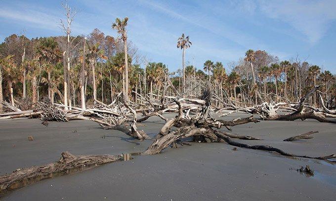 Rừng ma lan rộng trên bờ biển North Carolina
