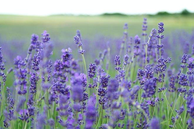 Top 7 loài hoa giúp làm đẹp da
