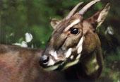 1/3 động vật có vú tuyệt chủng được tái phát hiện