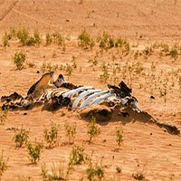 1 triệu loài đối mặt với tuyệt chủng trong nhiều thập kỷ