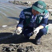 10.000 con ếch quý đột ngột chết hàng loạt ở Peru