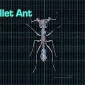 10 côn trùng