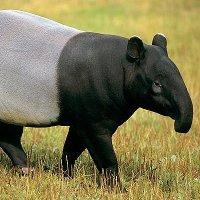 10 con vật có hình dáng kỳ lạ nhất thế giới