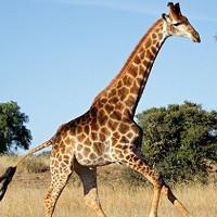 10 loài động vật có lớp da vô cùng đặc biệt