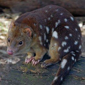 10 loài động vật có tập tính giao phối kì lạ trên thế giới