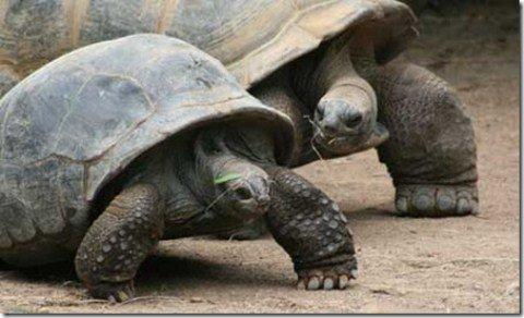 10 loài động vật thọ nhất hành tinh