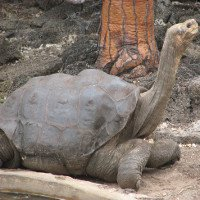10 loài động vật tuyệt chủng trong 10 năm qua