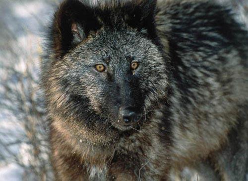 10 loài săn mồi nguy hiểm nhất