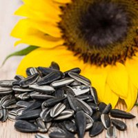 10 nguồn đạm thực vật tuyệt vời thay thế đạm động vật