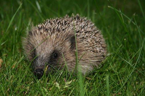 12 loài vật cực khôn trong cạnh tranh sinh tồn