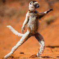 25 khoảnh khắc siêu hài hước của các loài động vật hoang dã