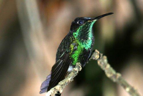 2500 loài chim có thể tuyệt chủng vì biến đổi khí hậu