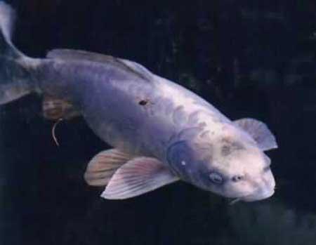 3 loài thủy sinh vật kỳ dị mang hình mặt người