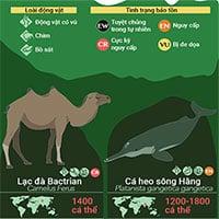32 loài động vật sắp tuyệt chủng, 9 trong số đó chỉ còn dưới 100 cá thể