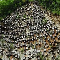 'Bức tường của tổ ong