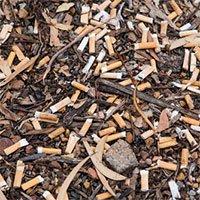 4,5 nghìn tỉ đầu lọc thuốc lá mỗi năm đang giết dần cây cỏ trên thế giới